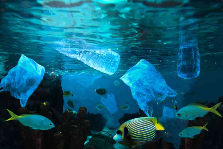 fish in the ocean swimming amongst plastic bottles and bags