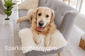 how to clean dog sick off sofa
