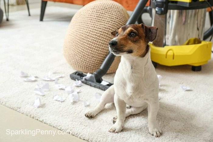 how to get pet smell out of vacuum cleaner
