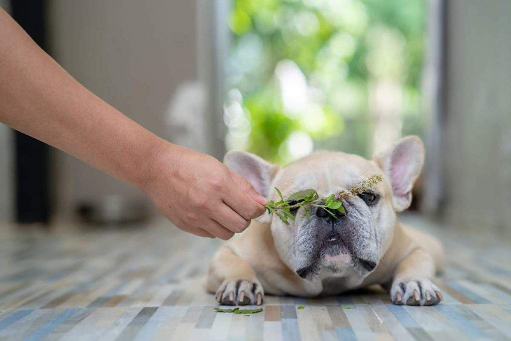 dog smelling some herbs