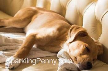 how to remove dog smell from leather couch