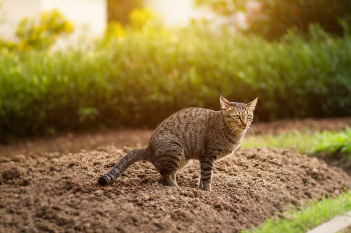 what smells deter cats from pooping