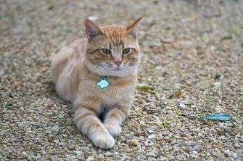 how to stop cats pooping on gravel